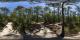 Le Cap Ferret - forêt