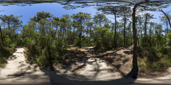 Cap Ferret - forêt