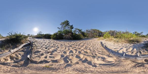 Le Cap Ferret - dunes
